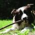 Dog is biting a stick