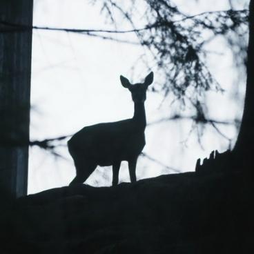 Roe deer silhouette