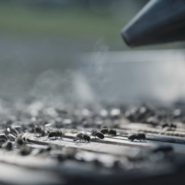 Bees And A Bee Smoker-14